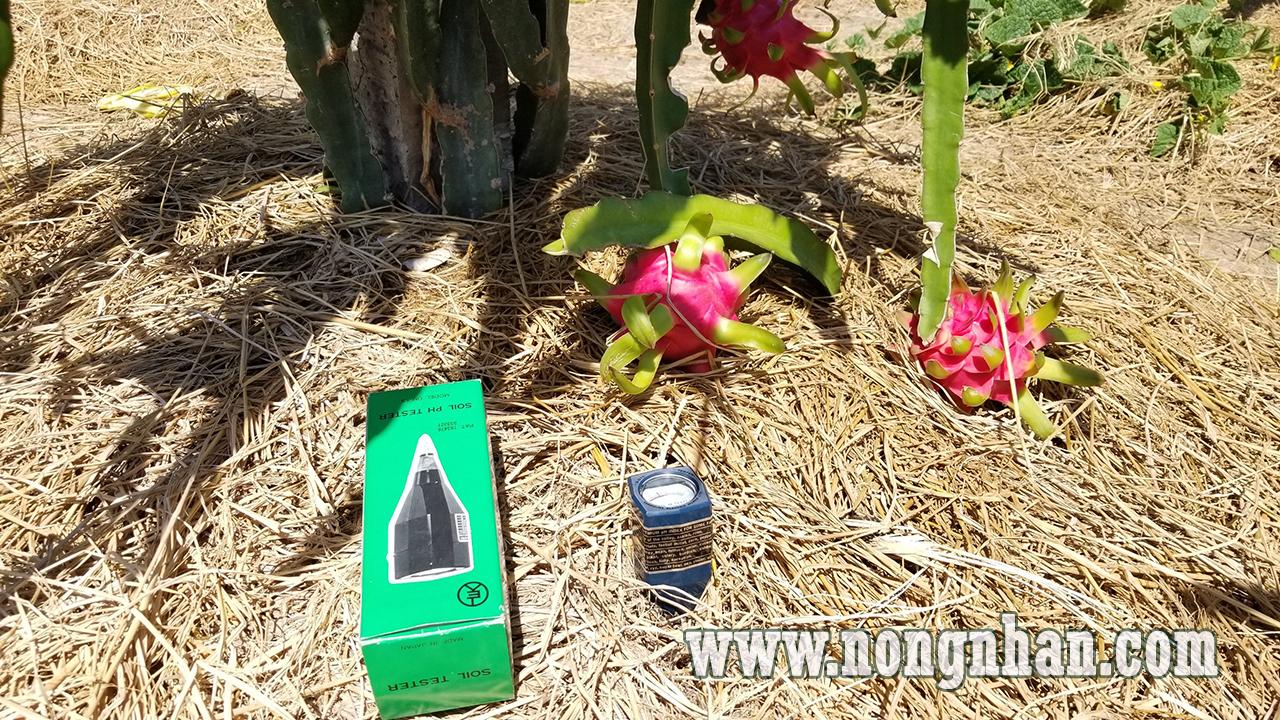 tiến hành đo pH vườn thanh long